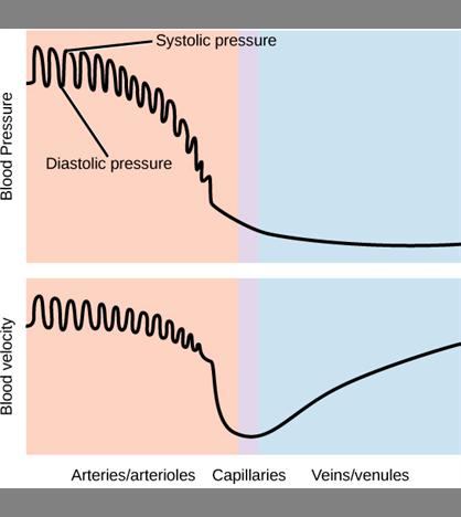 højt systolisk blodtryk lavt diastolisk