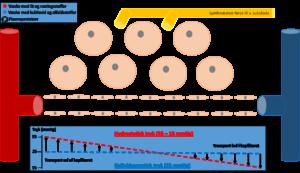 Parakapillære kredsløb animation